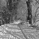 Lower res B&W Back lane in snow IMG_7703