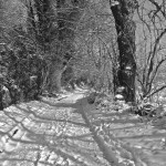 Ow res B&W Back lane in snow IMG_7703