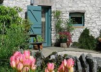 douglas-barn-tulips